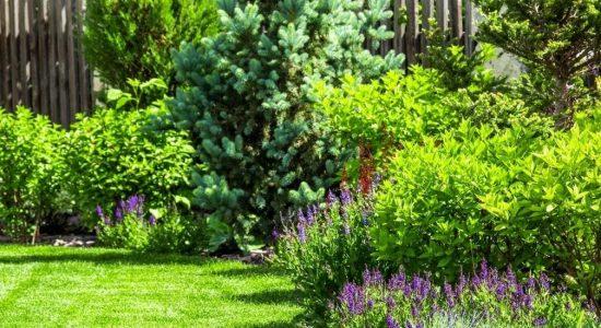 trädgård2 jpeg